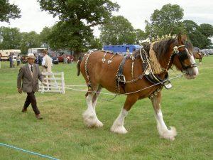 Ryedale Show @ Wellburn Park, Kirkbymoorside | England | United Kingdom